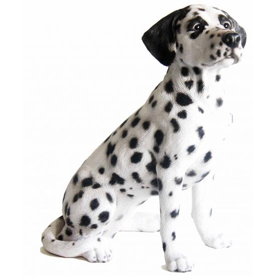 Image of Beeld zittende Dalmatier hond 51 cm