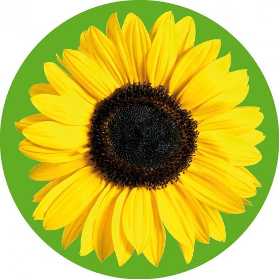Image of Bloemen bierviltjes zonnebloem 10x
