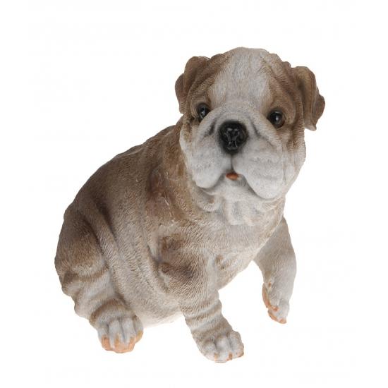Image of Bulldog beeldje zittend 13,5 cm type 1