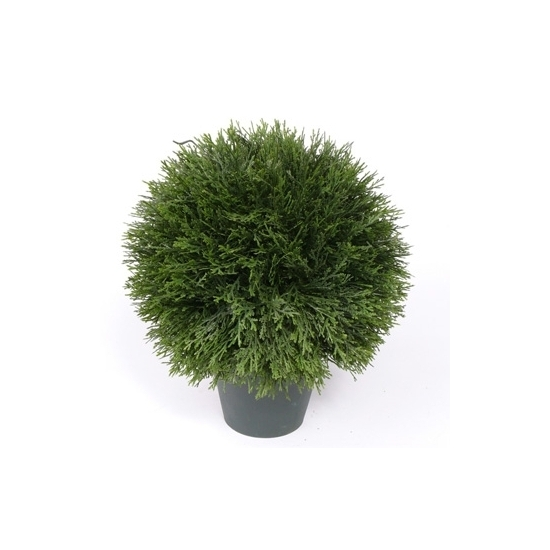 Image of Cypress bol in pot 36 cm