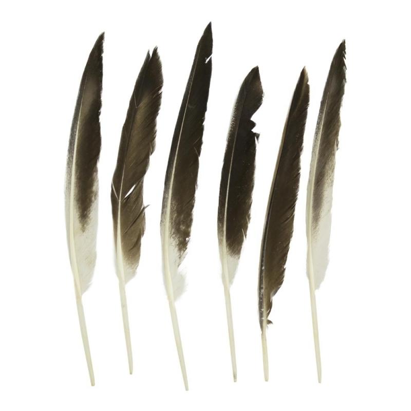 Image of Eenden veren 5 stuks