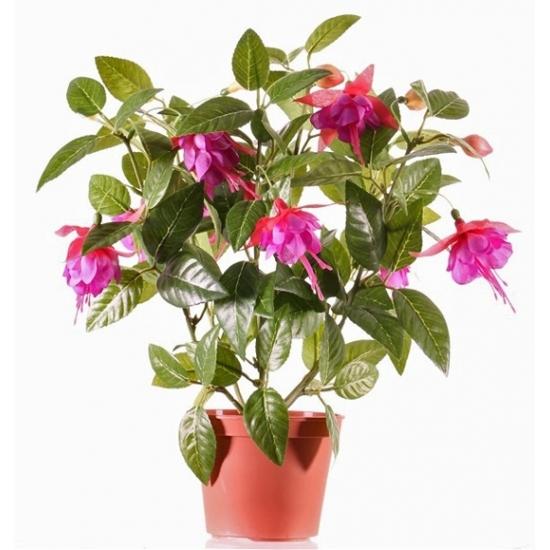 Image of Fuchsia plant donkerroze in pot 30 cm