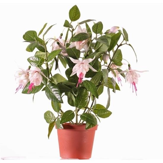 Image of Fuchsia plant roze in pot 30 cm