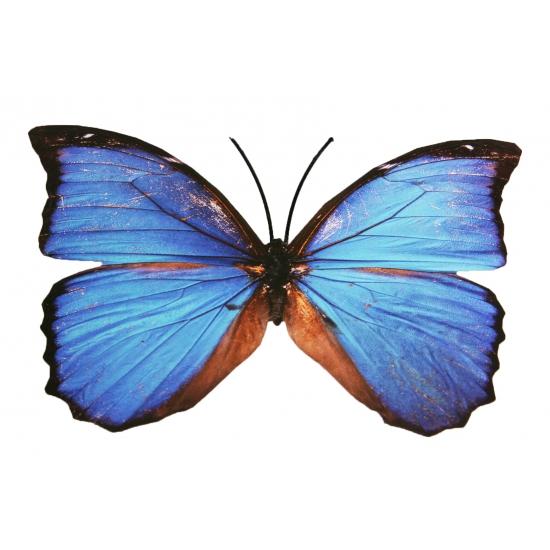 Image of Gekleurde vlinders van metaal 30 cm