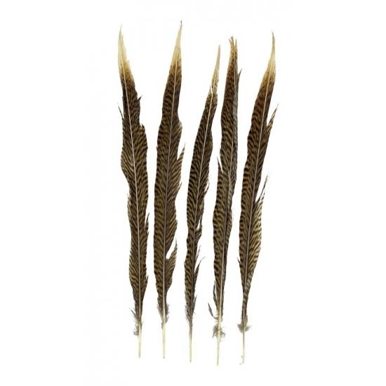 Image of Goudfazant veren 38 cm 5 stuks