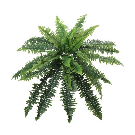 Image of Groene varen plant 70 cm