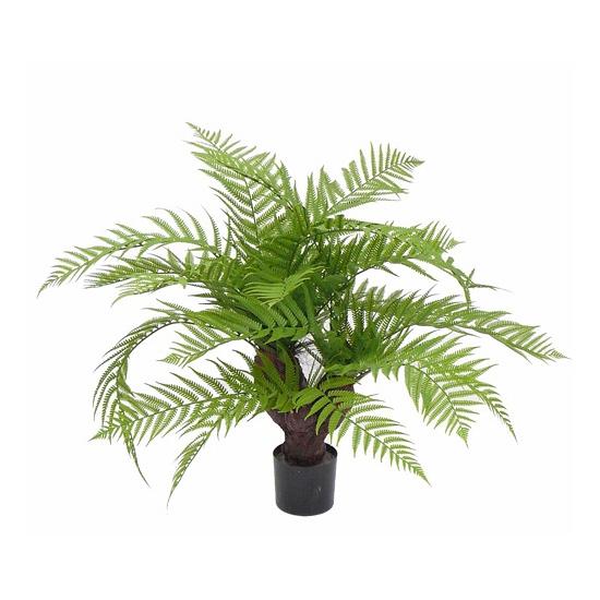 Image of Groene varen planten 60 cm