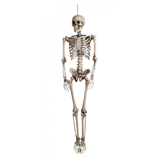 Image of Halloween versiering skelet 160 cm
