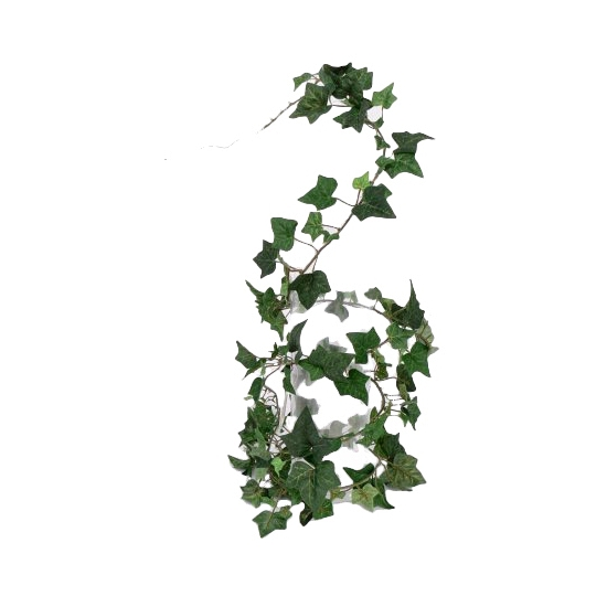 Image of Hedera plant 180 cm