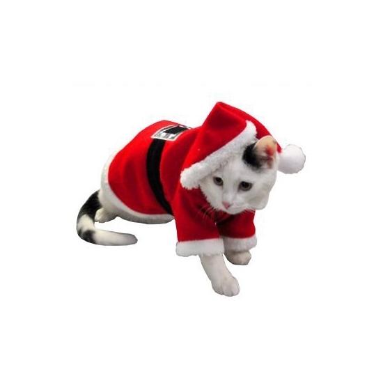 Image of Honden en katten verkleed kostuum