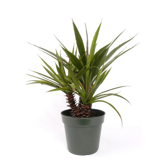 Image of Kunst Aloe planten in pot 71 cm