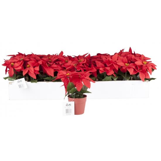 Image of Kunstbloem kerstster rood 20 cm