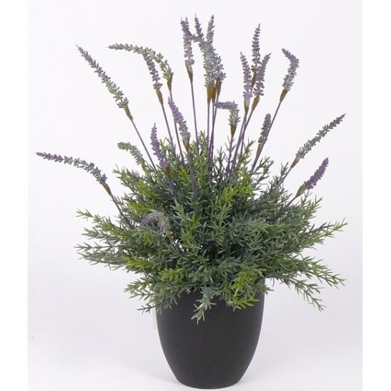 Image of Lavendel plant in pot 30 cm