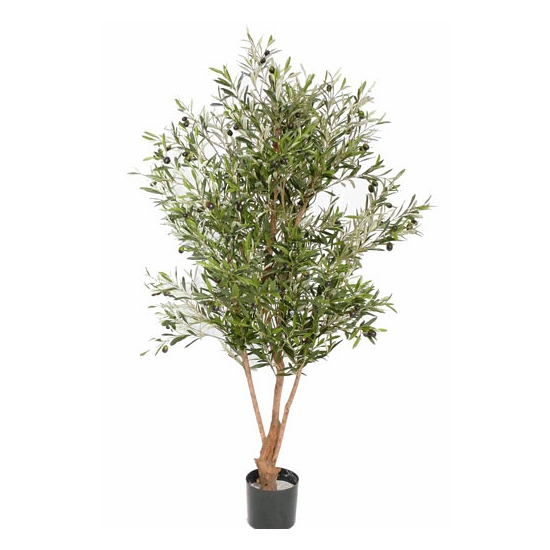 Image of Nep olijfboom 150 cm