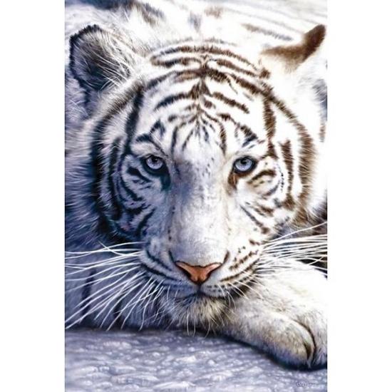 Image of Poster witte tijger 61 x 91 cm