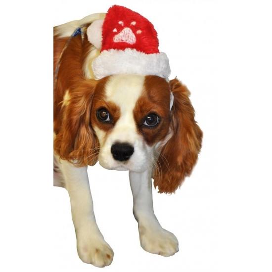 Carnavalskleding Verkleedkleding voor honden
