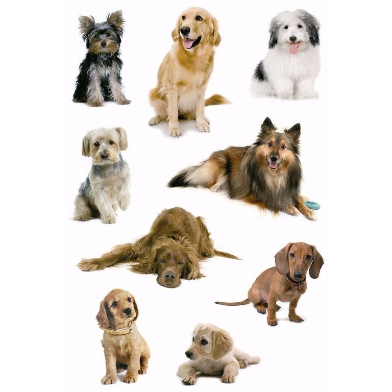 Honden stickers 3 vellen